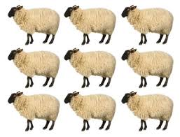 Sometimes fans = sheep